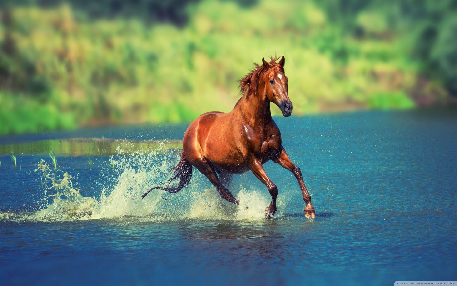 At Yarışları 10 Haziran'da Başlıyor